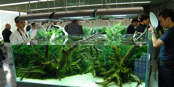 aquarium gallery Living Art: Stunning Aqua Forest Aquariums