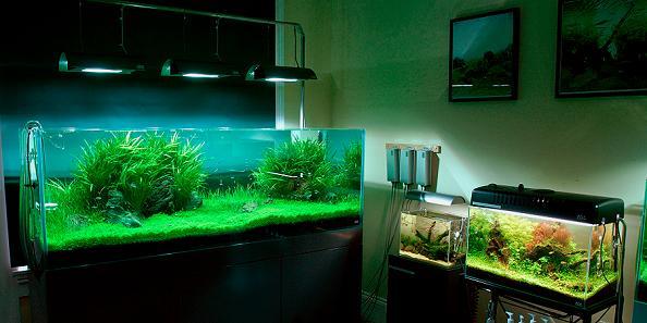 aquariums Living Art: Stunning Aqua Forest Aquariums