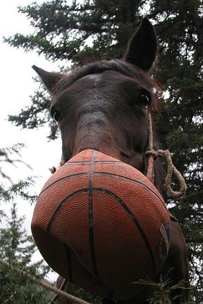 basketball-horse