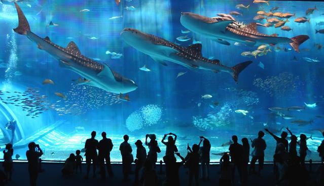kuroshio black current sea okinawa churaumi aquarium massive The Worlds Second Largest Aquarium Tank   Kuroshio (Black Current) Sea; Okinawa, Japan