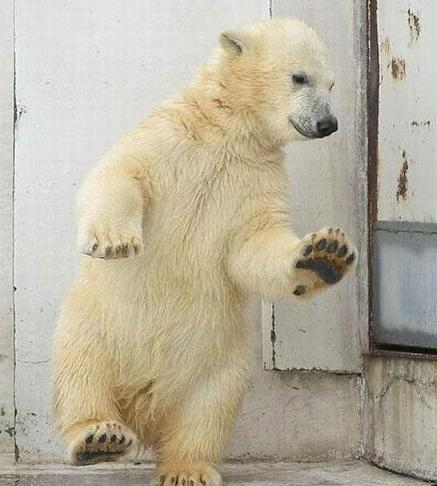 polar-bear-tippy-toe
