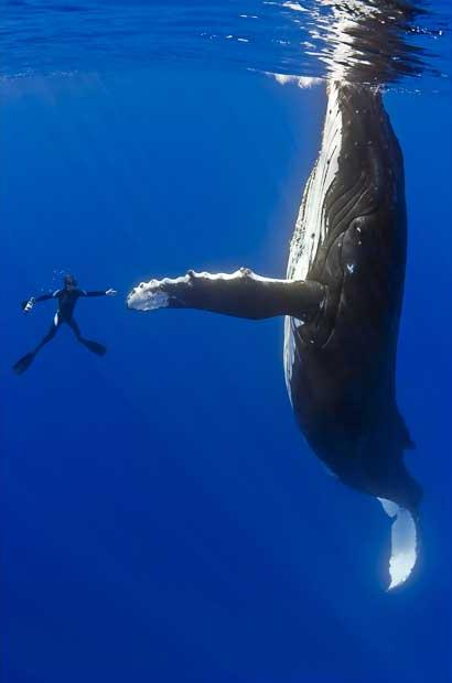 diver-whale-high-five