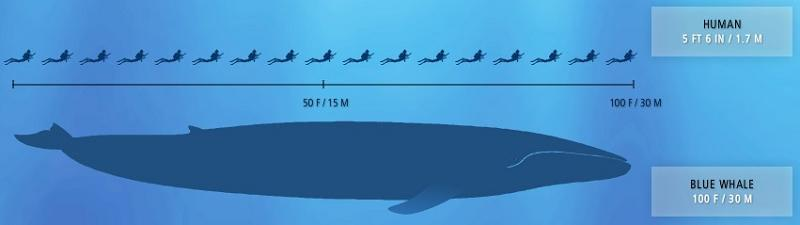 blue whale largest creature ever 2009 Year in Review