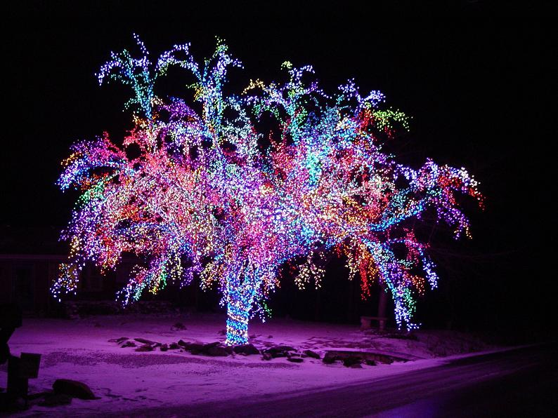 Picture of the Day – Brightest. Tree. Ever.