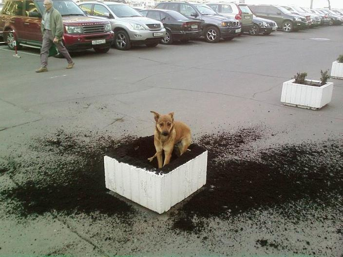 i didnt do it dog digs up flower bed Picture of the Day   December 7, 2009