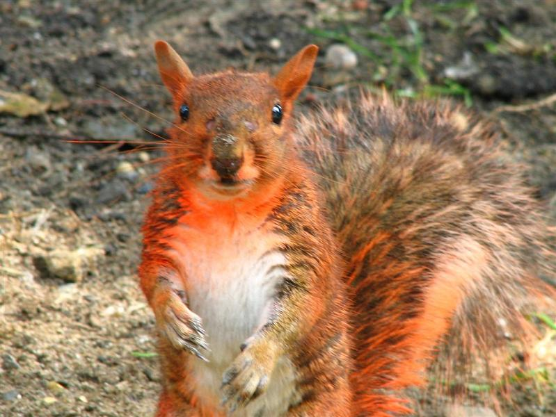 paintball explodes on squirrel Picture of the Day   December 19, 2009