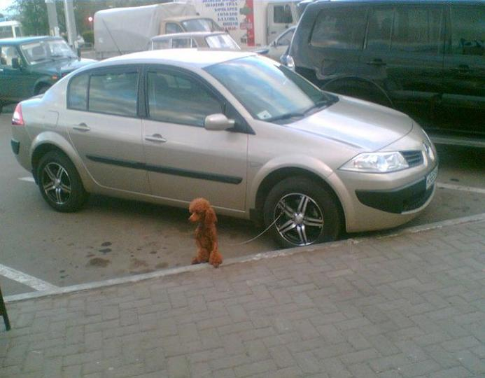 poodle dog tied to car tire rim Picture of the Day   December 27, 2009