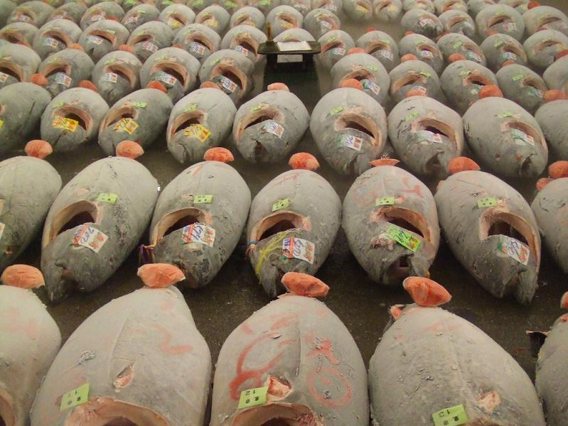 bluefin tuna auction tokyo japan tsukiji The Largest Fish and Seafood Market in the World