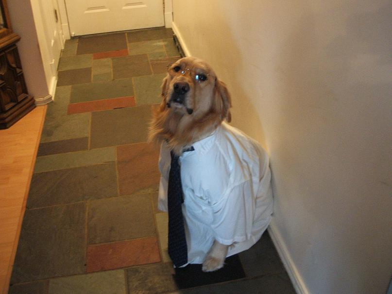 business dog with shirt and tie and glasses on The Friday Shirk Report   January 8, 2009 | Volume 39
