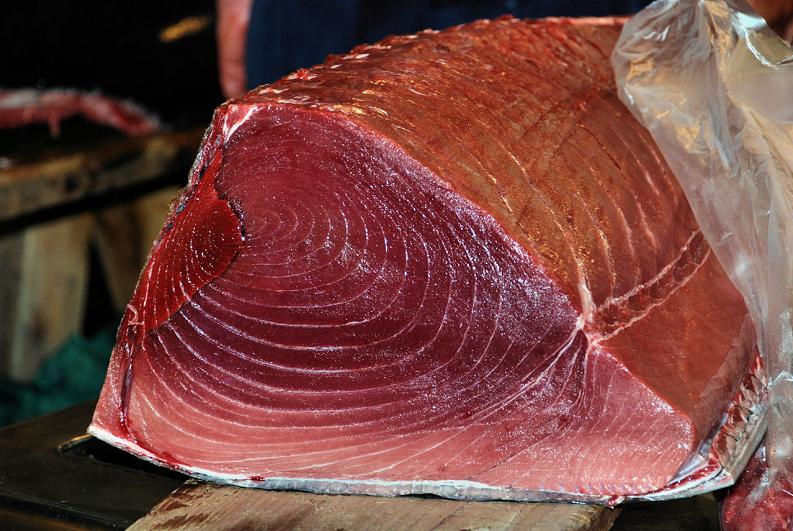 fresh tuna from tsukiji fish and seafood market The Largest Fish and Seafood Market in the World