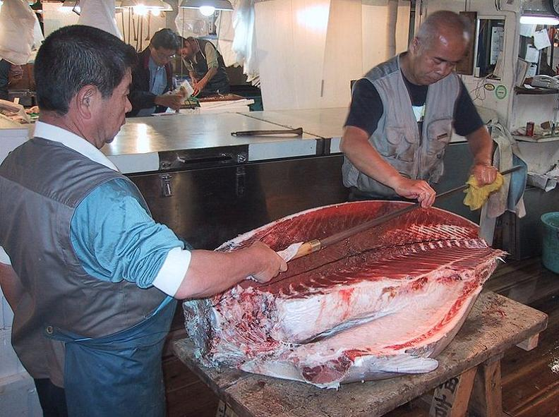 oroshi hocho wholesale knife for tuna filet The Largest Fish and Seafood Market in the World