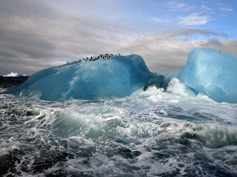penguins on blue iceberg Picture of the Day   January 20, 2010