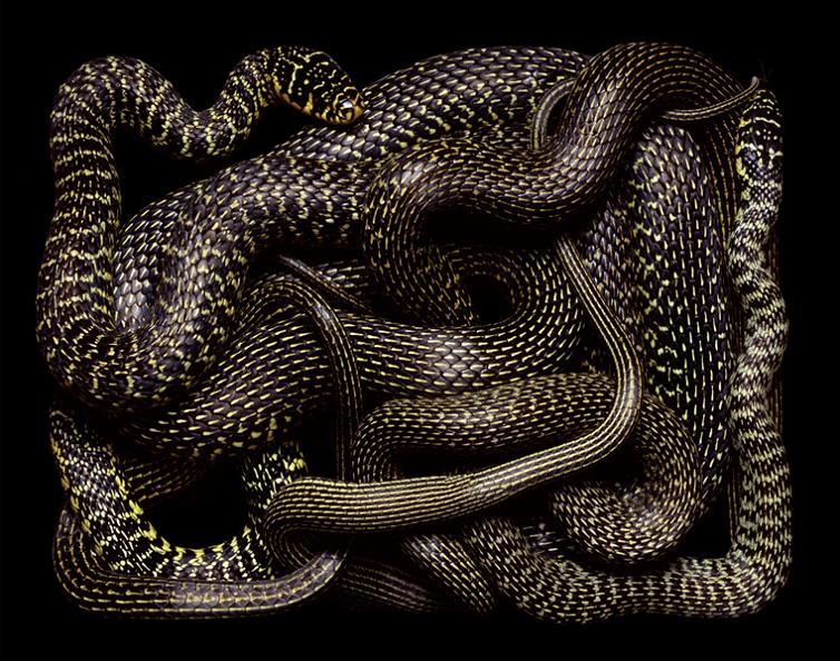 black and yellow snake art Slithery Snake Art