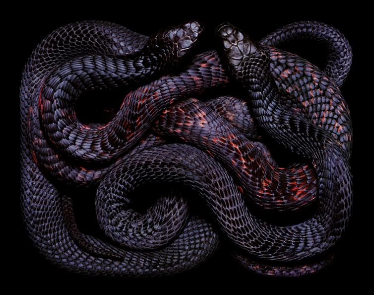 black snake color pattern Slithery Snake Art