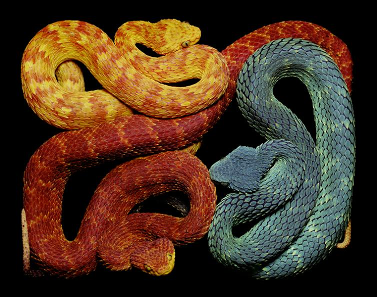 brightly colored snakes Slithery Snake Art