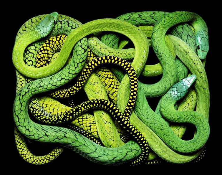 brilliant snake colors guido mocafico Slithery Snake Art
