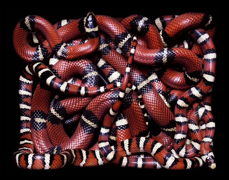 brilliant snake patterns Slithery Snake Art