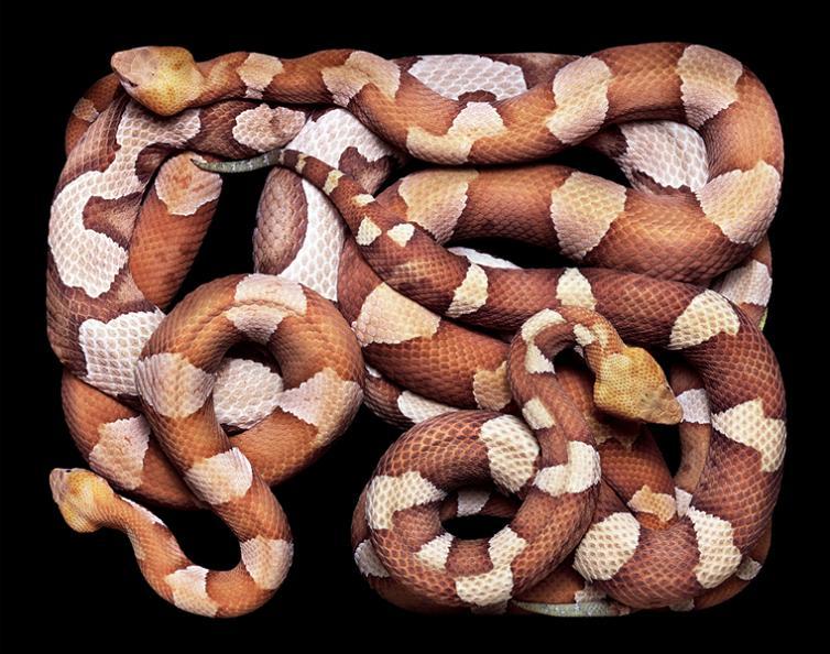 camoufalge snake pattern print color Slithery Snake Art
