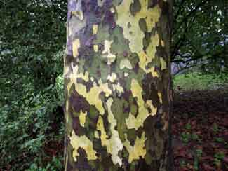 camouflage tree trunk art naoko ito Branching Out: Tree Art by Naoko Ito