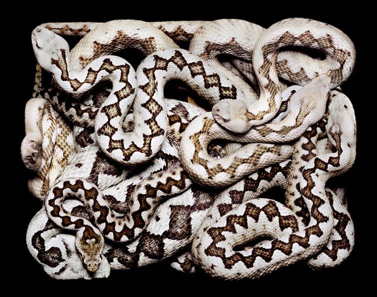 cool snake colors white Slithery Snake Art