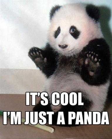 its-cool-im-just-a-panda