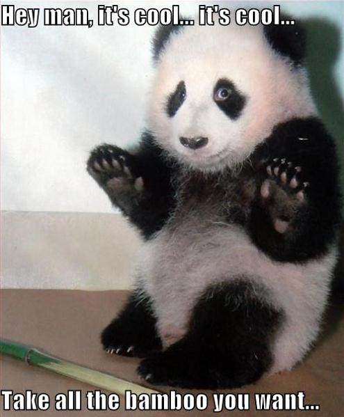 panda with hands up and bamboo 11 Reasons why the Bronze goes to... Pandas!
