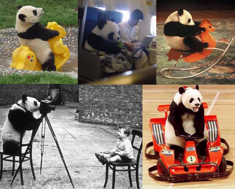 pandas-acting-human