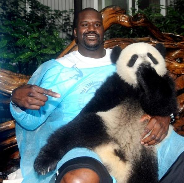 shaq holding a panda 11 Reasons why the Bronze goes to... Pandas!