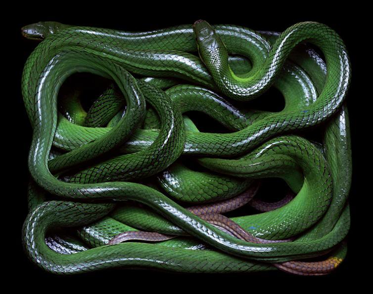 snake skin art vibrant colors by guido mocafico Slithery Snake Art