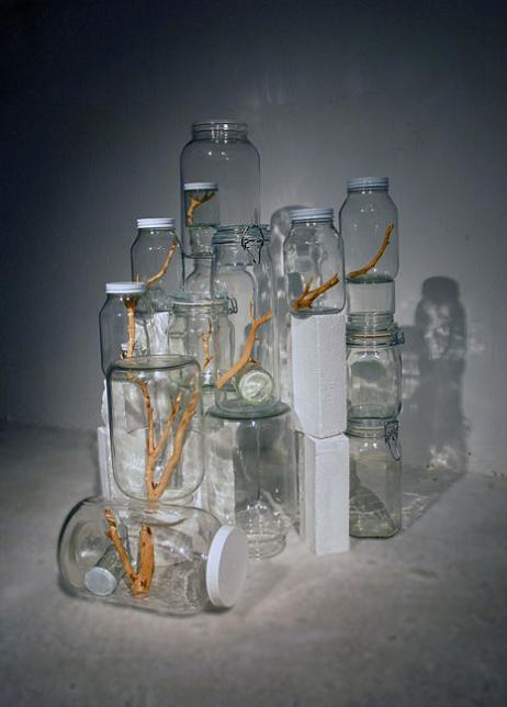 tree branch cut up into pieces in jar Branching Out: Tree Art by Naoko Ito