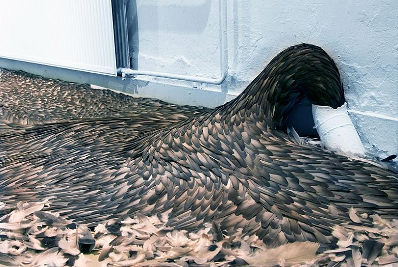 feathers-spewing-out-from-drain-art