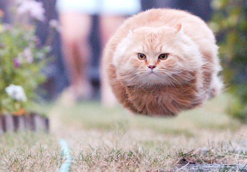 hovercat The Friday Shirk Report   March 19, 2010 | Volume 49