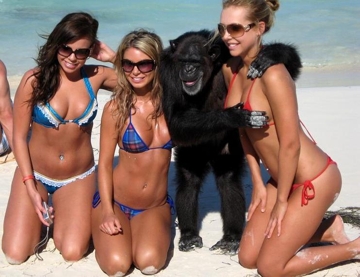 monkey with three hot girls in bikinis on beach copping feel The Friday Shirk Report   March 5, 2010   Volume 47