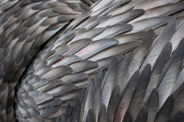 pigeon feathers closeup Incredible Feather Art by Kate MccGwire