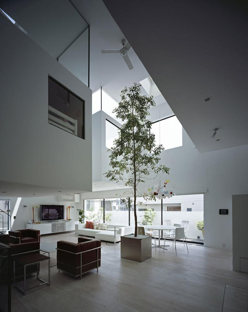 big-tall-tree-in-living-room