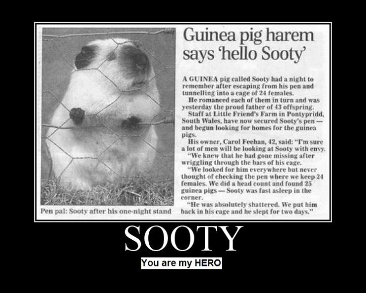 sooty guinea pig harem The Friday Shirk Report   May 14, 2010 | Volume 57