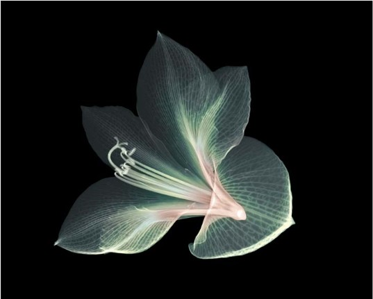 x-ray-nature