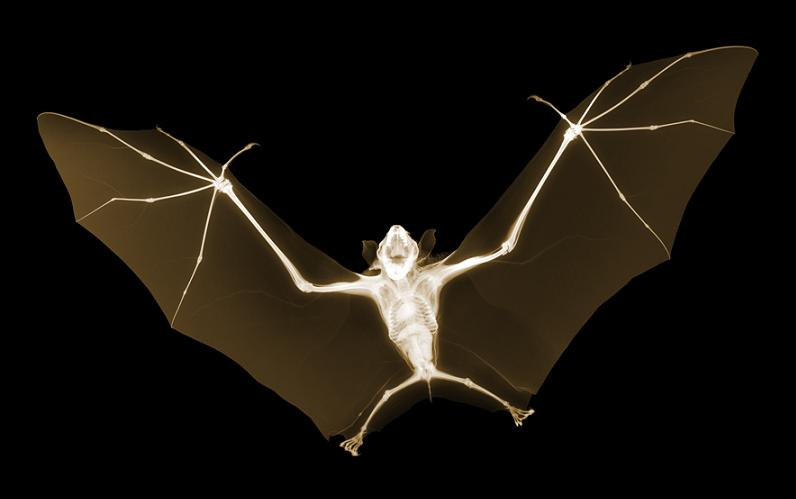 x ray of bat nick veasey The X Ray Vision of Nick Veasey