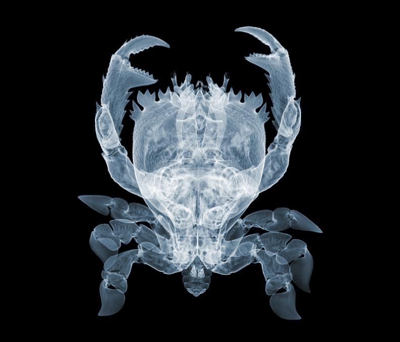 x ray photography of nick veasey The X Ray Vision of Nick Veasey