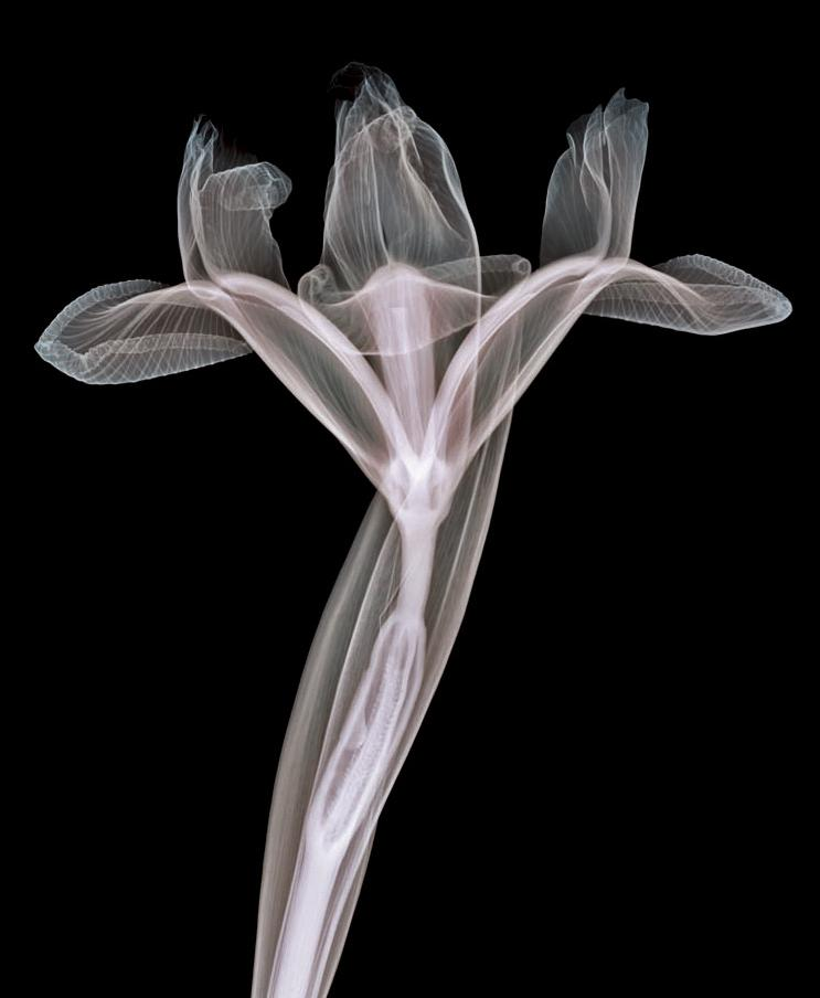 xray photograph The X Ray Vision of Nick Veasey