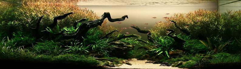 Underwater Gardening: The World's Best Aquariums of2009