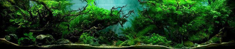 10 aj judy prajitno putra forest aquarium Underwater Gardening: The Worlds Best Aquariums of 2009