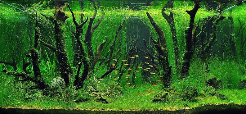 12 yee kin cheong living art Underwater Gardening: The Worlds Best Aquariums of 2009