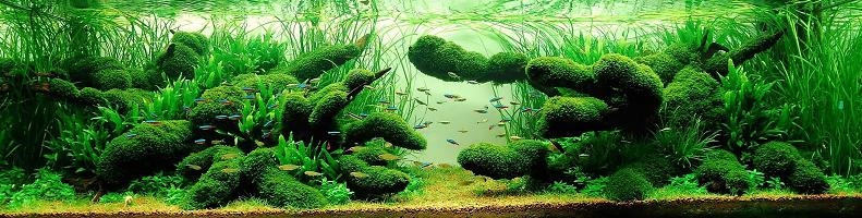 14 wong kam aquarium hobbyist Underwater Gardening: The Worlds Best Aquariums of 2009