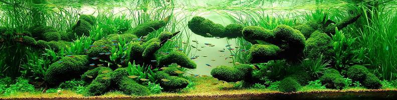 14 wong kam aquarium hobbyist Underwater Gardening: The Worlds Best Aquariums of 2009