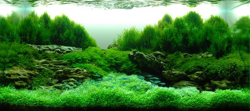 18 zhang jianfeng aquascapist Underwater Gardening: The Worlds Best Aquariums of 2009