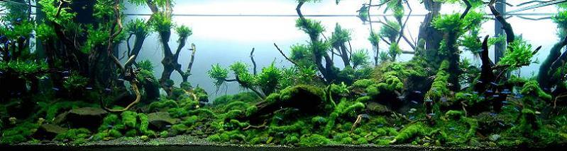 2 chan shih hsien iaplc 2009 Underwater Gardening: The Worlds Best Aquariums of 2009