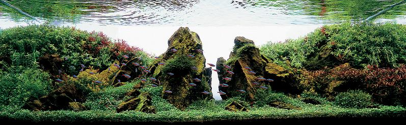 20 hidekazu tsukiji aquascaping Underwater Gardening: The Worlds Best Aquariums of 2009