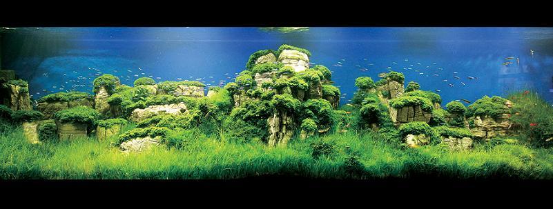 2008 iaplc grand prize work cheng sui wai Underwater Gardening: The Worlds Best Aquariums of 2009