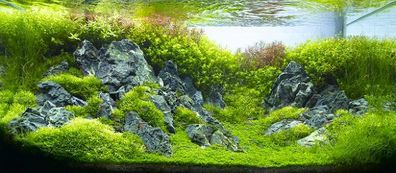 Underwater gardening the world s best aquariums of 2009 Aquarium landscape